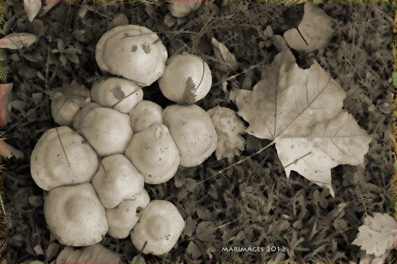 Sienipalleroita