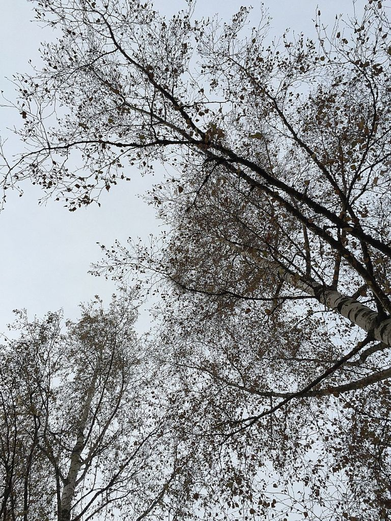 Paljaat puut